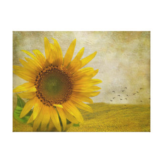 Single Sunflower on sunflower pasture Canvas Print