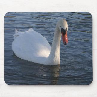 Single Swan in lake Mouse Pad