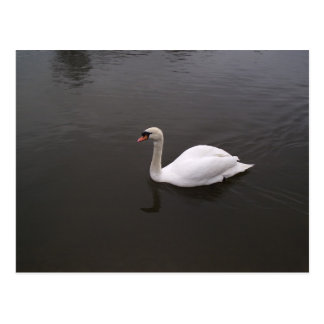 Single Swan Postcard