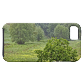 Single tree in agricultural farm field, Tuscany, 2 iPhone 5 Case