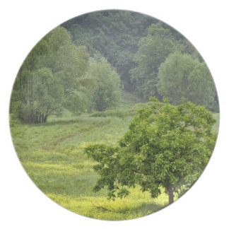 Single tree in agricultural farm field, Tuscany, 2 Melamine Plate