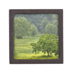 Single tree in agricultural farm field, Tuscany, 2 Premium Jewelry Box