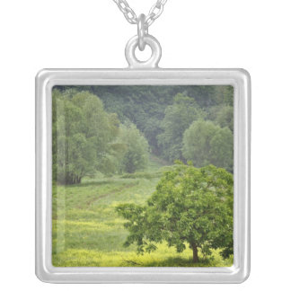 Single tree in agricultural farm field, Tuscany, 2 Silver Plated Necklace