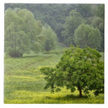 Single tree in agricultural farm field, Tuscany, 2 Tiles