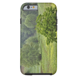 Single tree in agricultural farm field, Tuscany, 2 Tough iPhone 6 Case