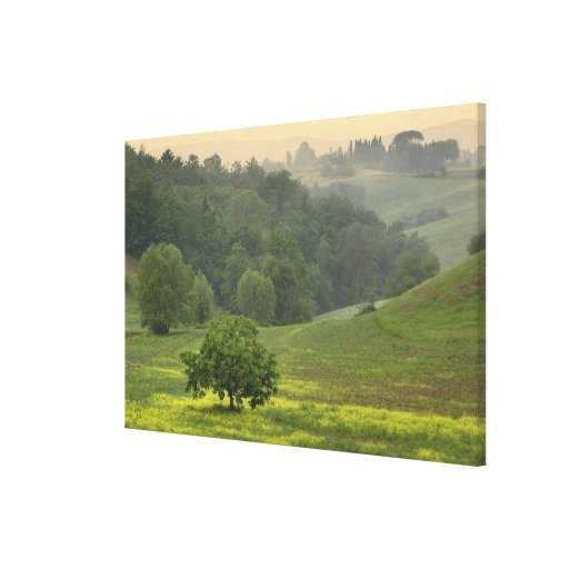 Single tree in agricultural farm field, Tuscany, Canvas Print