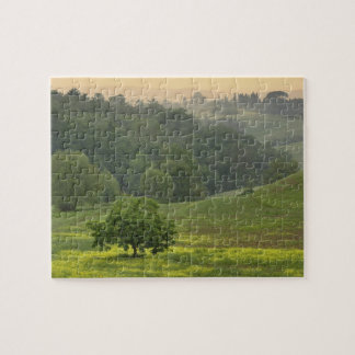 Single tree in agricultural farm field, Tuscany, Jigsaw Puzzle
