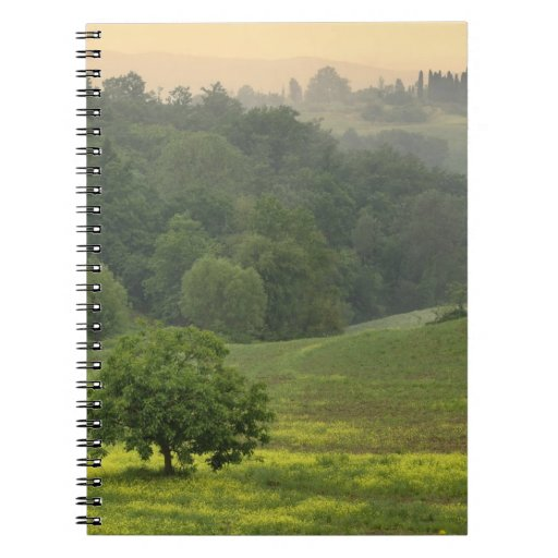 Single tree in agricultural farm field, Tuscany, Note Books