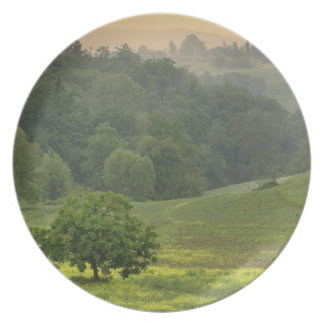 Single tree in agricultural farm field, Tuscany, Party Plate