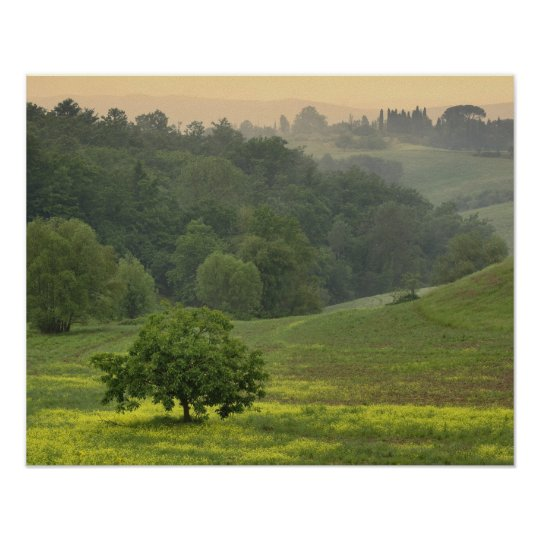 Single tree in agricultural farm field, Tuscany, Poster
