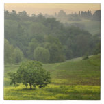 Single tree in agricultural farm field, Tuscany, Tile