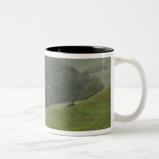 Single tree in agricultural farm field, Tuscany, Two-Tone Coffee Mug