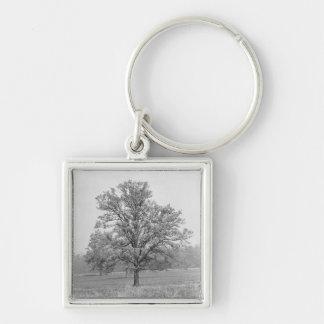 Single tree in field B&W Keychain