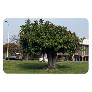 Single tree in garden magnets