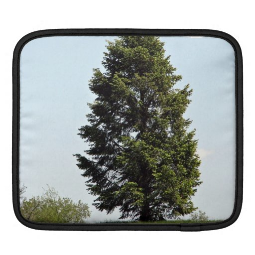 Single tree in park sleeves for iPads