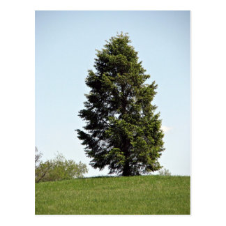 Single tree in park postcard
