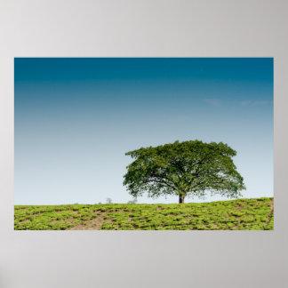 Single tree in tea plantations poster