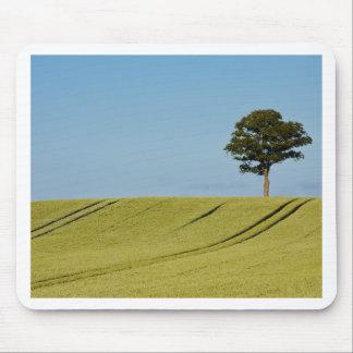Single tree on a grain field mouse pad