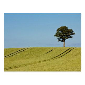 Single tree on a grain field postcard