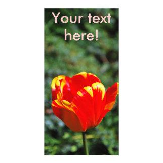 Single tulip customized photo card