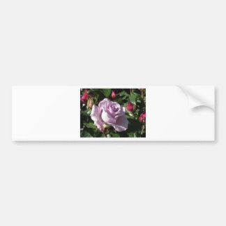 Single violet rose flower with red roses around bumper sticker