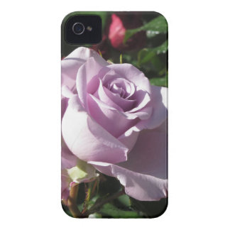Single violet rose flower with red roses around iPhone 4 case