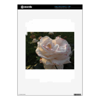 Single white and red streaked rose flower decal for the iPad 2