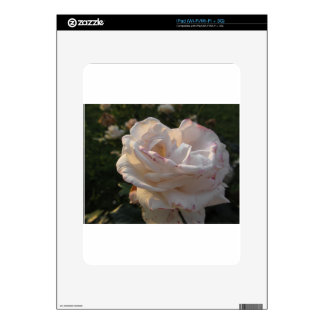 Single white and red streaked rose flower iPad skin