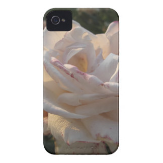 Single white and red streaked rose flower iPhone 4 cover