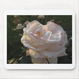 Single white and red streaked rose flower mouse pad