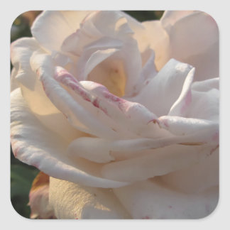 Single white and red streaked rose flower square sticker