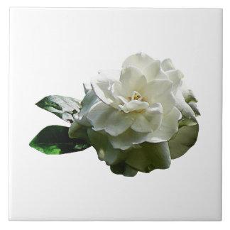 Single White Camellia Tile