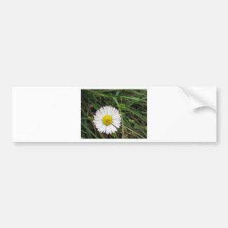 Single white daisy flower on green background bumper sticker