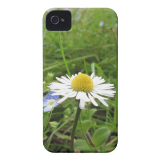 Single white daisy flower on green background Case-Mate iPhone 4 case