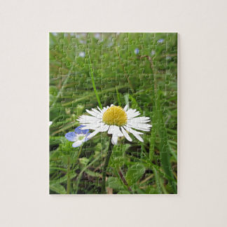 Single white daisy flower on green background jigsaw puzzle