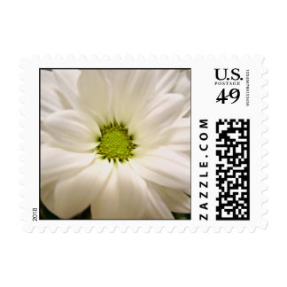 Single white daisy flower stamps stamps