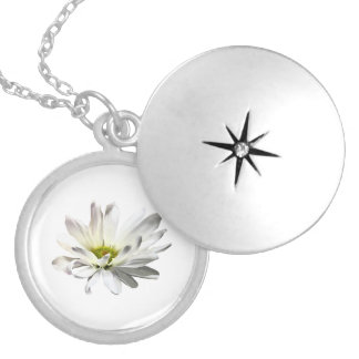 Single White Daisy Silver Plated Necklace