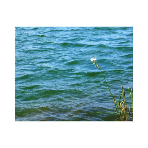 Single white flower water reed pond gallery wrapped canvas