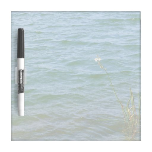 Single white flower water reed pond Dry-Erase board