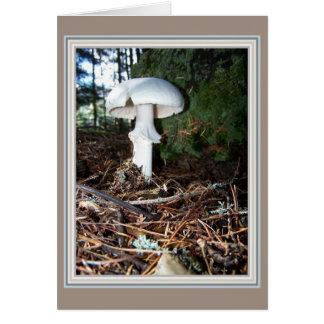 Single White Fungi Card