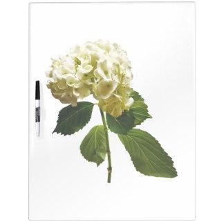 Single White Hydrangea Dry-Erase Board