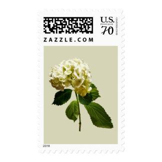 Single White Hydrangea Postage
