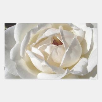 Single white rose flower in spring rectangular sticker