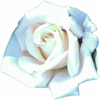 Single White Rose Photo Sculpture