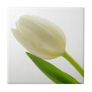 Single White Tulip Ceramic Tile