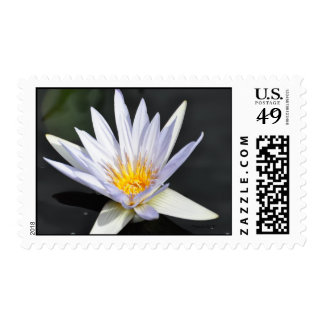 Single white water lily. postage stamp