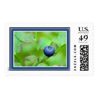 Single Wild Blueberry Postage