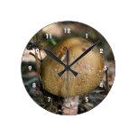 Single Wild Brown Mushroom Nature Clock