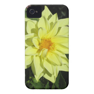 Single yellow dahlia flower in spring iPhone 4 case