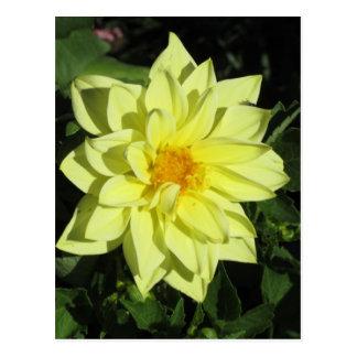 Single yellow dahlia flower in spring postcard